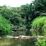 Cockscomb - Jaguar Reserve
