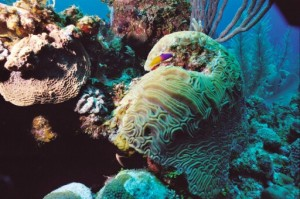 Belize Southern Barrier Reef