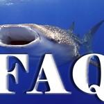 Whale Shark Faq