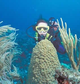 Belize Barrier Reef Dives