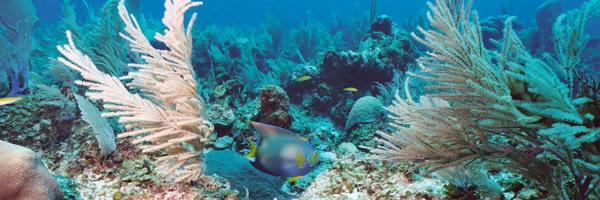 Dive Belize Barrier Reef