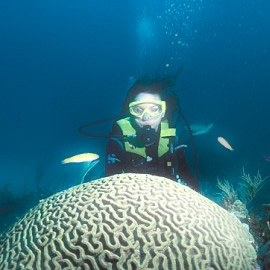 Scuba Diving At Silk Cayes