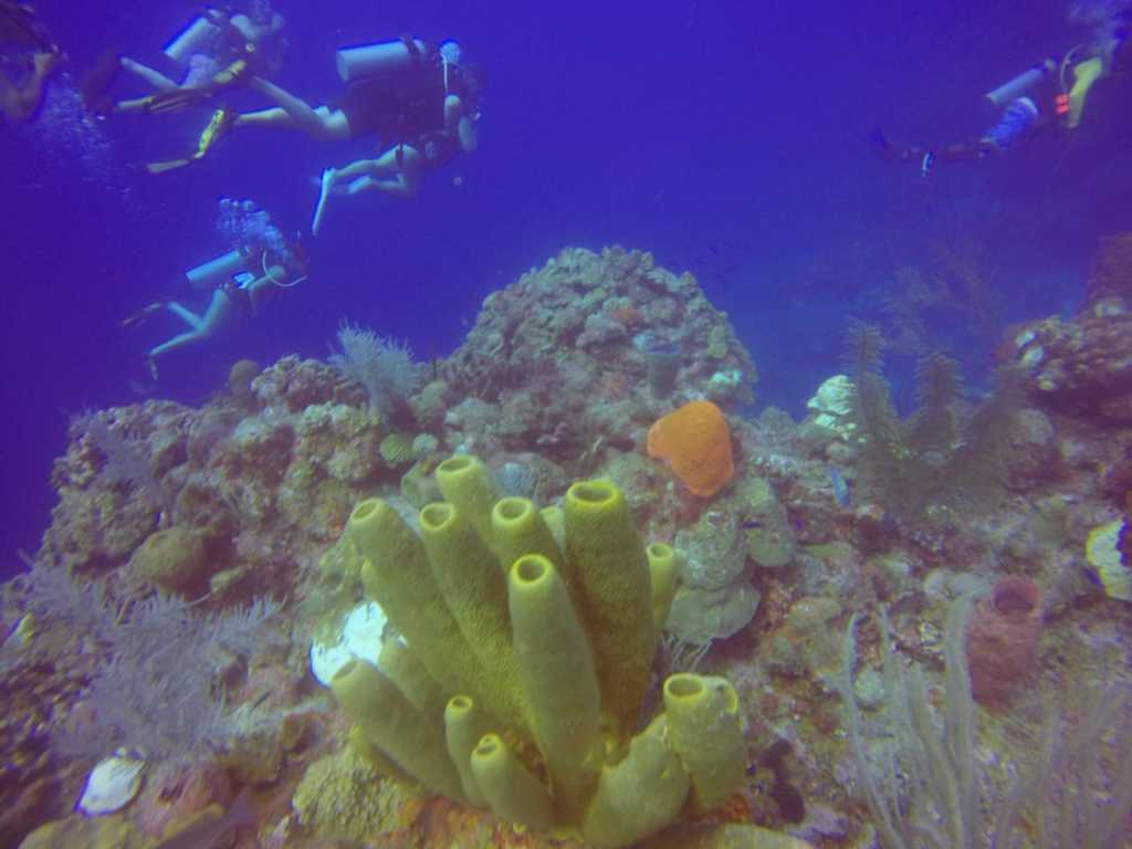 Dive at Glover's Reef